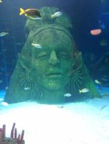 sealife sunken head