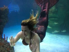 mermaid-at-sea-life-manchester